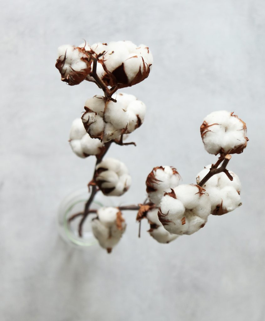 about environment organic cotton